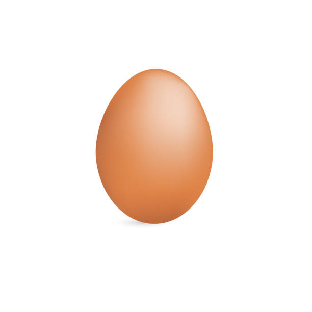 realistic brown eggs on white background vector - egg stock illustrations