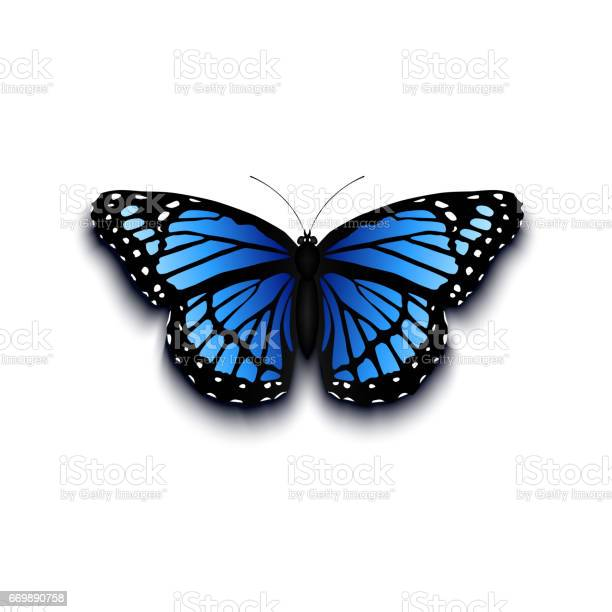 Realistic butterfly icon isolated on white background vector id669890758?b=1&k=6&m=669890758&s=612x612&h=dtjuvzrqs639axpbkitpx6dtl96ivwhxrghvwxxm4vw=