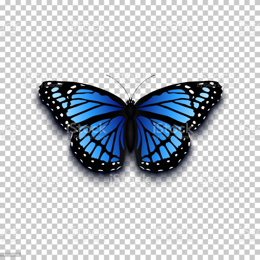 realistic butterfly icon stock illustration download image now istock realistic butterfly icon stock illustration download image now istock