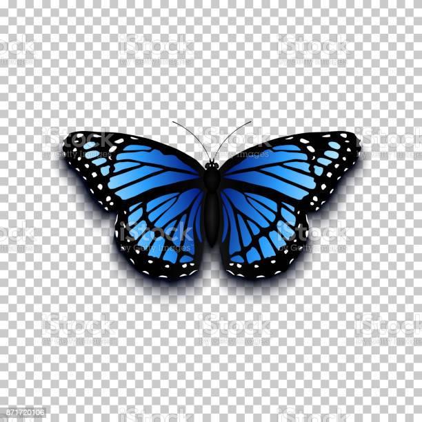 Realistic butterfly icon vector id871720106?b=1&k=6&m=871720106&s=612x612&h=vxti k1tpa2x1wym5l4k8zjfwtrxhg6qwz pk mipa4=