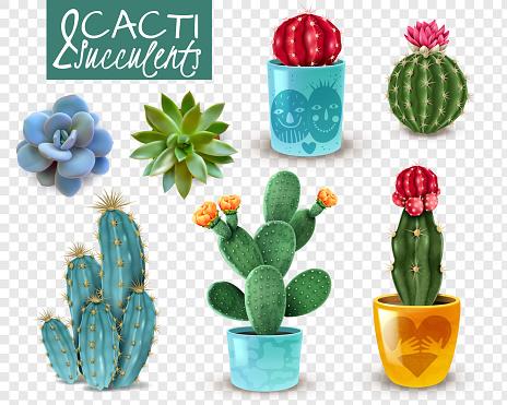 realistic cactus succulents transparent set