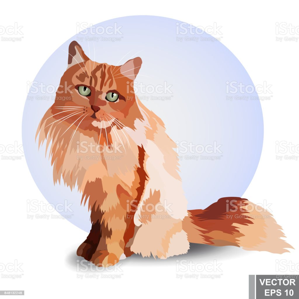 リアルな猫赤い色見て座っていますペットボトルを採用 - ふわふわの