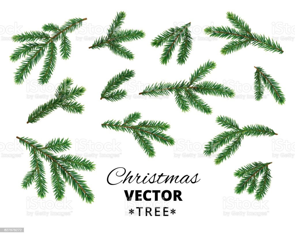 Realistic Christmas tree branches isolated on white background.