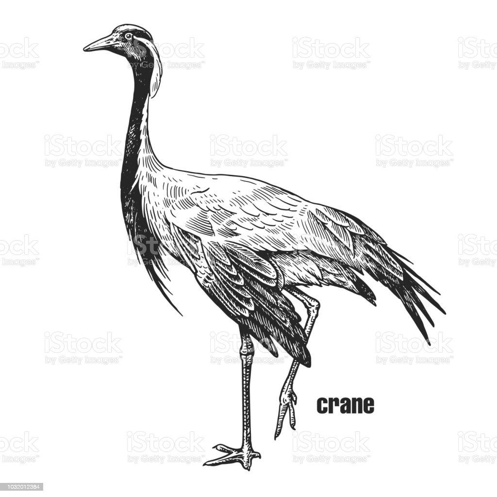 Realistic Crane Bird Black And White Graphics Stock