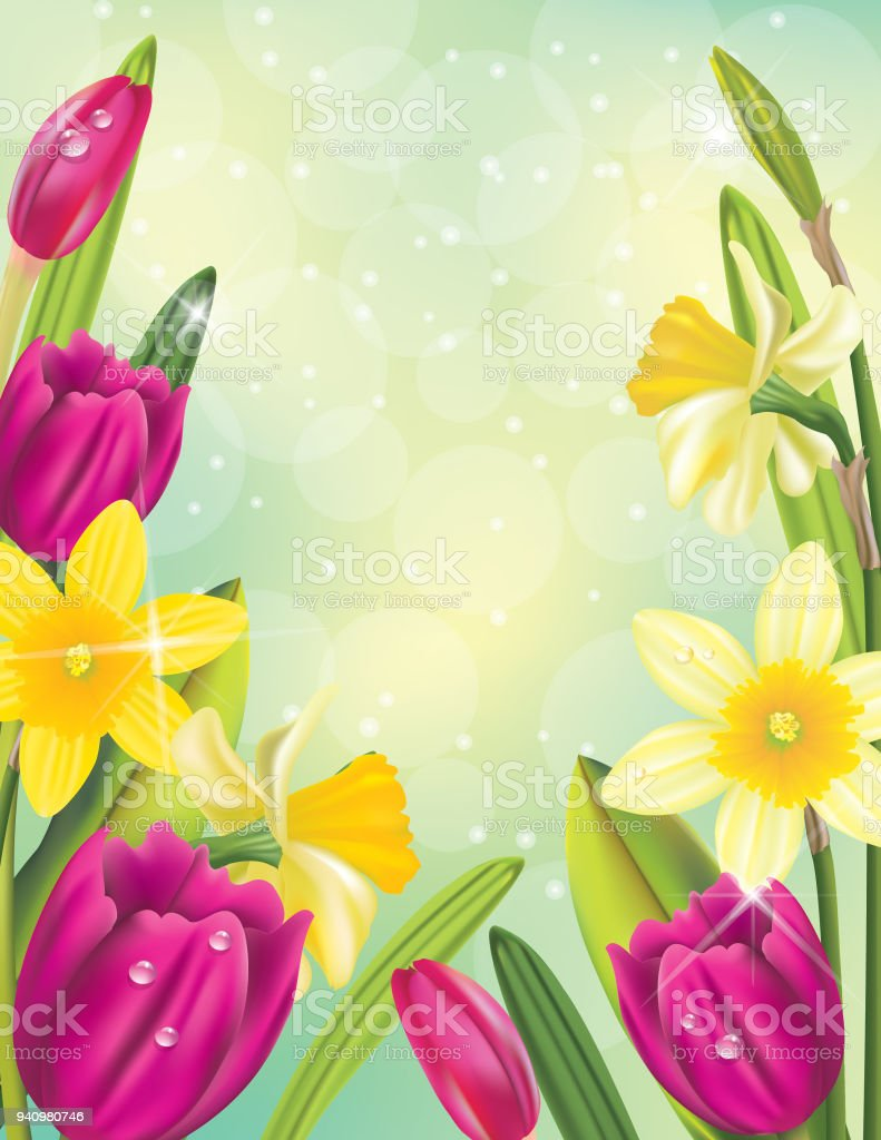 Realistic Daffodil And Spring Flowers Background Border Stock Vector
