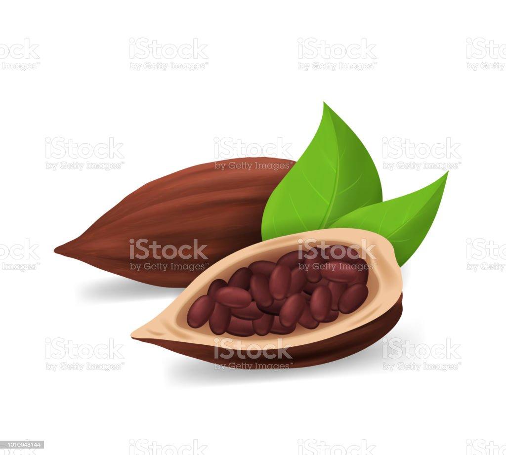 Realistische gedetailleerde 3d droog cacao peulen. Vector - Royalty-free Begrippen vectorkunst