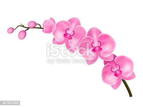 Realistic Detailed 3d Flower Orchid Blossom Branch Plant Isolated on White Background Beautiful Floral Decoration for Web. Vector illustration