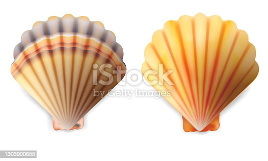istock Realistic Detailed 3d Shell Set. Vector 1303900655
