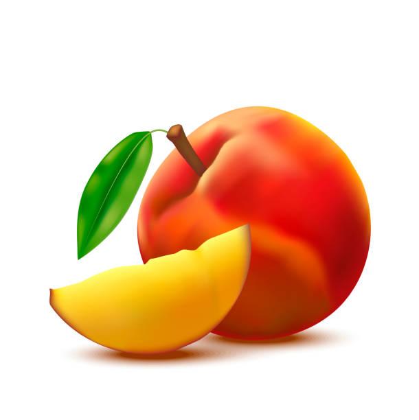 realistische detaillierte 3d ganz pfirsichfrucht und in scheiben schneiden. vektor - nektarinenmarmelade stock-grafiken, -clipart, -cartoons und -symbole
