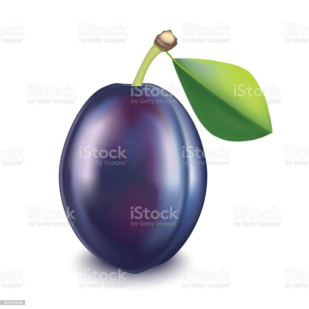 Realistic Detailed Fruit Plum. Vector vector art illustration