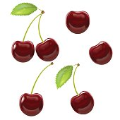 Realistic Detailed Ripe Red Berry Cherry Tasty Vitamin Fruit for Web Style Design. Vector illustration