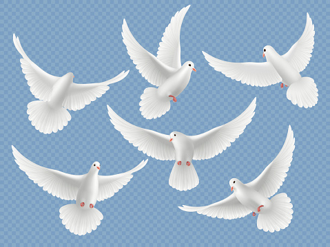 Realistic doves. White freedom flying birds pigeons religion symbols vector pictures collection