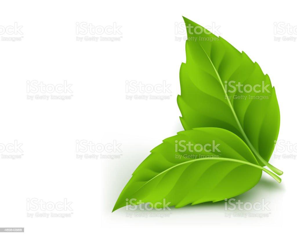 Realistic Eco Friendly Leaves vector art illustration