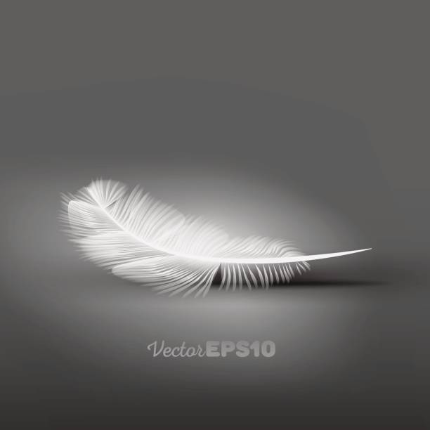 Royalty Free Single Feather Clip Art, Vector Images ...