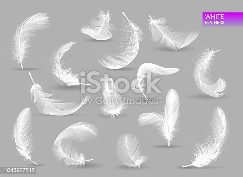 White bird falling feather isolated on white background vector collection. Realistic feathers. Illustration of feather bird, soft white plume