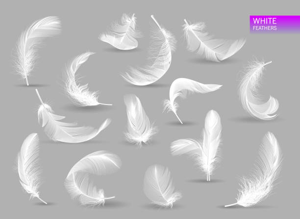 illustrazioni stock, clip art, cartoni animati e icone di tendenza di realistic feathers. white bird falling feather isolated on white background vector collection. illustration of feather bird, soft white plume - piume colorate