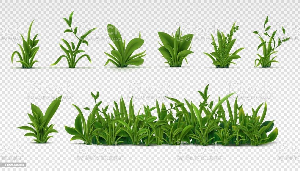 Realistisch groen gras. 3D verse lente planten, verschillende kruiden en struiken voor posters en reclame. Vector set geïsoleerd op wit - Royalty-free Achtergrond - Thema vectorkunst