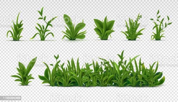 Realistisch Groen Gras 3d Verse Lente Planten Verschillende Kruiden En Struiken Voor Posters En Reclame Vector Set Geïsoleerd Op Wit Stockvectorkunst en meer beelden van Achtergrond - Thema