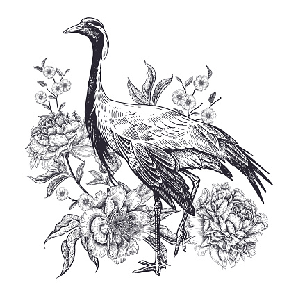 Realistic hand drawing of crane and beautiful peonies isolated on white background.