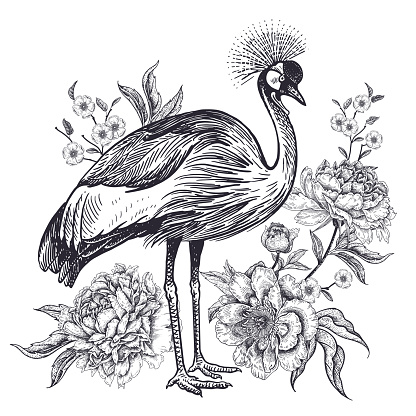 Realistic hand drawing of crowned crane and beautiful peonies isolated on white background.