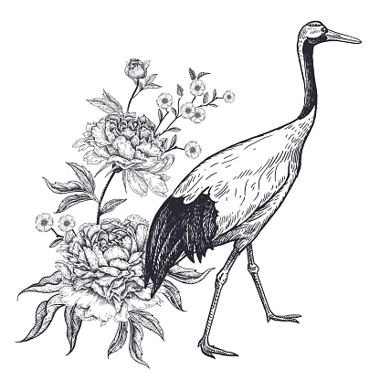 Realistic hand drawing of Japanese crane and peonies isolated on white background.