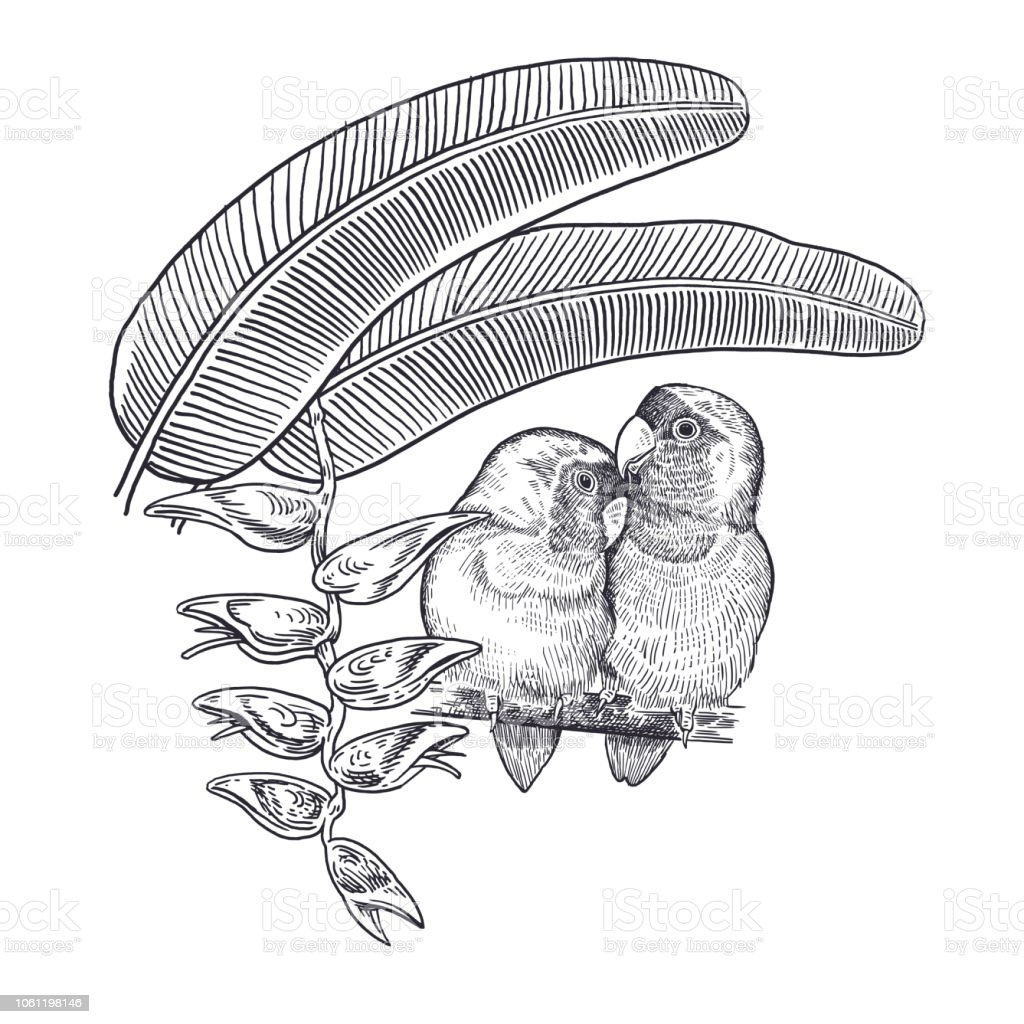 Realistic Hand Drawing Of Parrots Lovebirds And Branch Tree Isolated On White Background Stock Illustration Download Image Now Istock