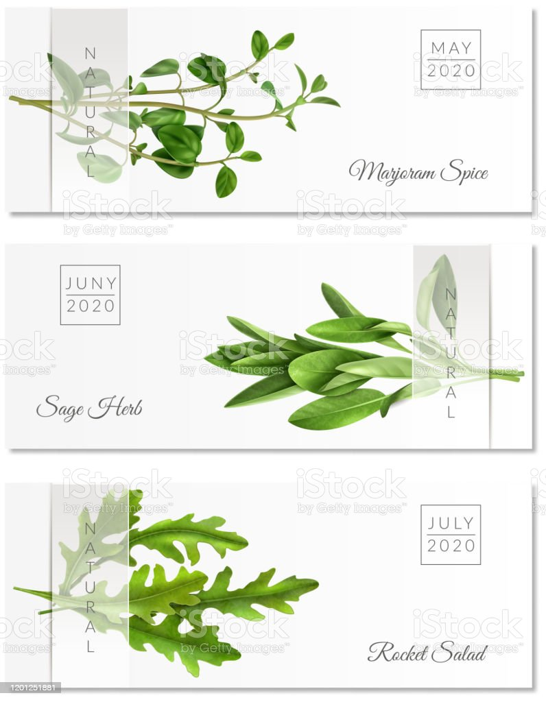 Realistic Herbs Banners Stock Illustration Download Image Now Istock