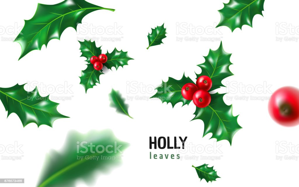 Realistic holly, ilex with berry and leaves, mistletoe set. Christmas, new year holiday celebration symbol, decorations. 3d realistic vector illustration isolated on white background vector art illustration