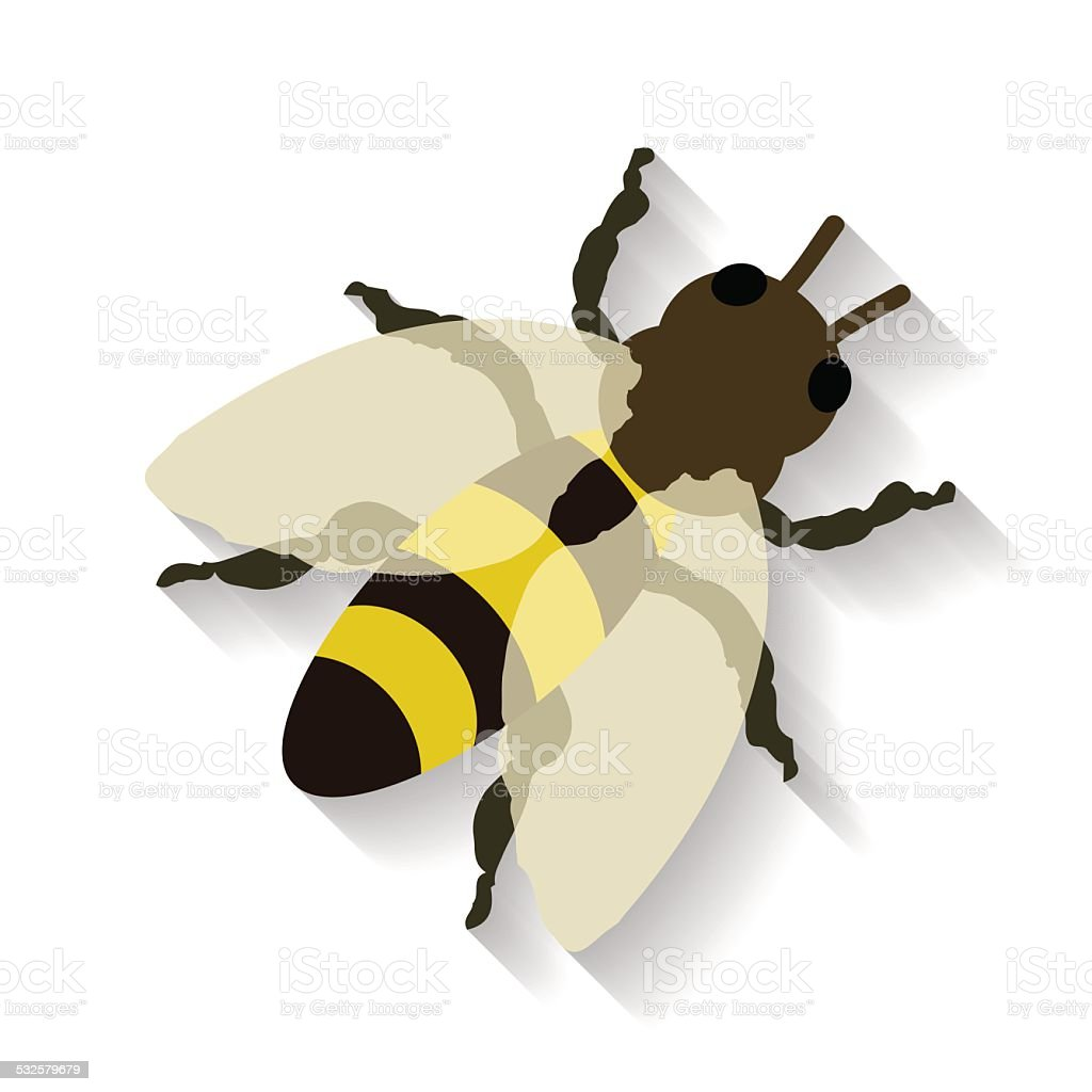 リアルなミツバチ絶縁白色の背景にしていますベクター