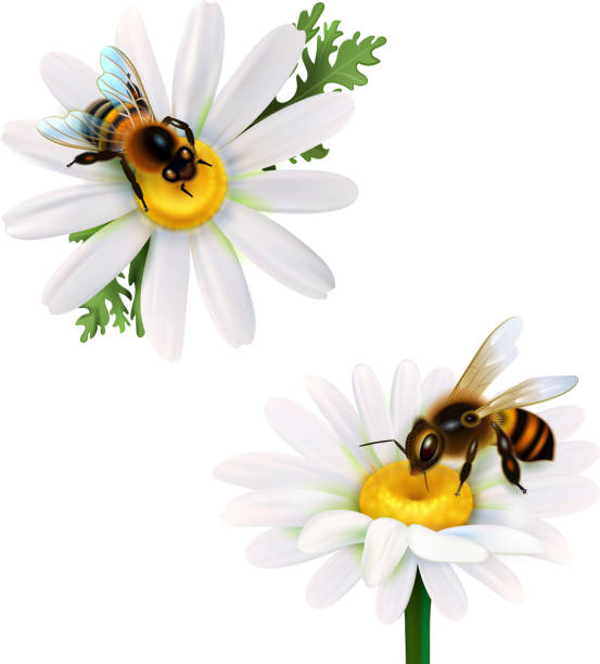 illustrazioni stock, clip art, cartoni animati e icone di tendenza di realistic honey bee set - impollinazione