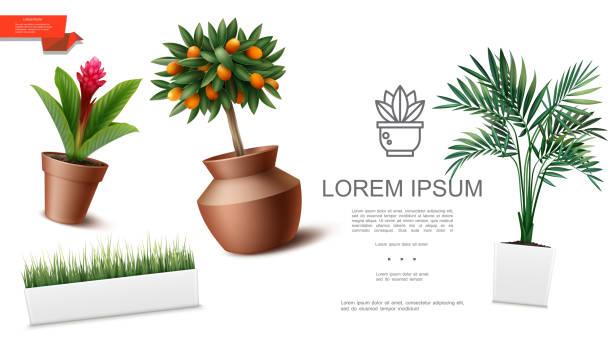 Realistische Zimmerpflanzen Vorlage – Vektorgrafik