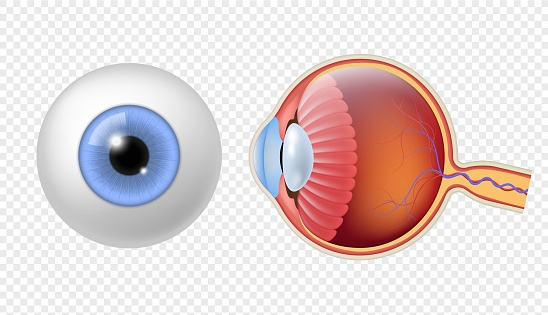Realistic human eyeball. Eye retina structure, round iris texture, anatomy object close up front, and side view eyeballs vector set