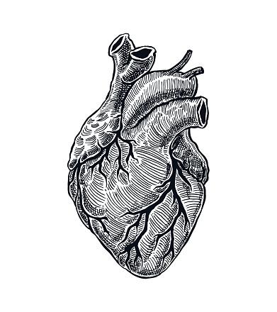 Realistic Human Heart
