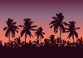 Realistic illustration of a forest of palm trees and the tops of the trees. Purple pink sky with space for text - vector
