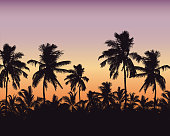 Realistic illustration of a forest of palm trees and the tops of the trees. Purple orange sky with space for text - vector