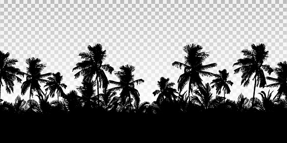 Realistic illustration of a horizon from the tops of palm trees. Black isolated on transparent background with space for your text - vector
