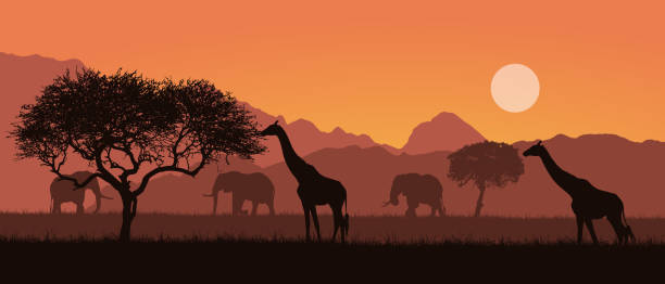 realistic illustration of a mountain landscape on safari in kenya, africa. giraffes and elephants with trees. orange sky with sun - vector - animals background stock illustrations