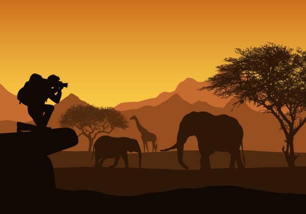realistische darstellung der afrikanischen safari mit berglandschaft, bäumen und elefant und giraffe. tourist mit rucksack nimmt fotografieren von tieren. unter dem orangen himmel mit aufgehender sonne - vektor - tierfotografie stock-grafiken, -clipart, -cartoons und -symbole
