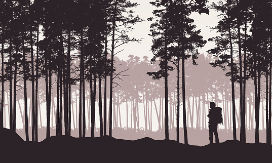 Realistic illustration of landscape with coniferous forest with pine trees under retro sky. Man hiker with backpack on a trip or walk - vector