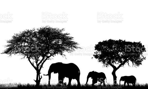 Realistic illustration of landscape with trees in african safari a vector id1138153265?b=1&k=6&m=1138153265&s=612x612&h=ffbykjcwqktdbvudu7o6malduxi2gv1iduqksk5xn7s=