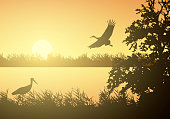 Realistic illustration of wetland landscape with river or lake, water surface and birds. Stork flying under orange morning sky with rising sun - vector