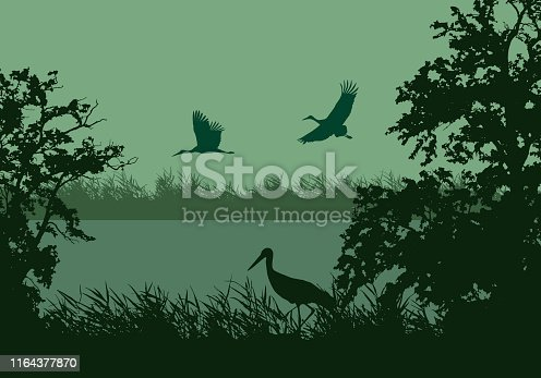 Realistic illustration of wetland landscape with river or lake, water surface and birds. Stork flying under green morning sky - vector