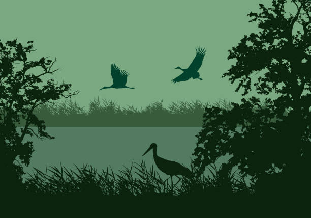 Realistic illustration of wetland landscape with river or lake, water surface and birds. Stork flying under green morning sky - vector Realistic illustration of wetland landscape with river or lake, water surface and birds. Stork flying under green morning sky - vector backgrounds silhouettes stock illustrations