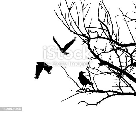istock Realistic illustration with silhouettes of three birds - crows or ravens sitting on tree branch without leaves and flying, isolated on white background - vector 1055503496