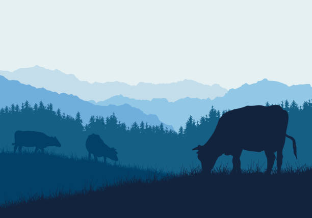 Realistic illustration with three silhouettes of cows on pasture, grass and forest, under blue sky - vector Realistic illustration with three silhouettes of cows on pasture, grass and forest, under blue sky - vector meadow stock illustrations