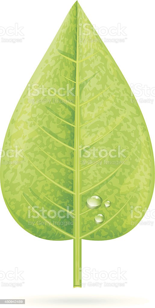 Realistic Leaf With Dew Drops vector art illustration