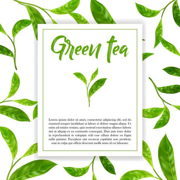 Realistisches Blättern des grünen Tees. Vektor-3d Illustration auf weißem Hintergrund. – Vektorgrafik