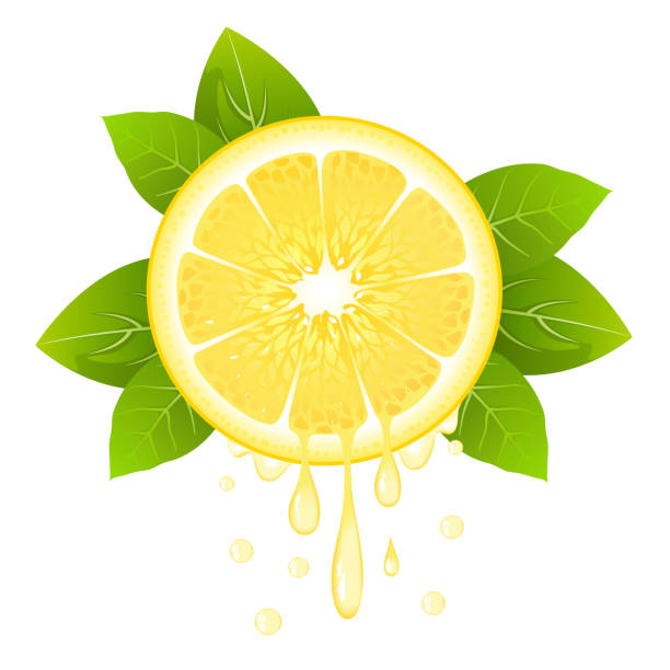 Realistic lemon slice with leaves and drops of juice vector art illustration