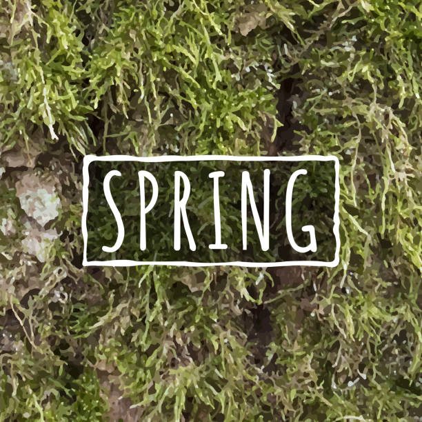 realistic moss texture - moss stock illustrations