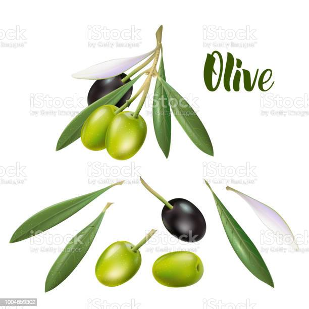 Realistic olive branch 3d illustration for advertising posters vector id1004859302?b=1&k=6&m=1004859302&s=612x612&h=xpe2iapvhu22davm5okq87cn5y73m 6kwt0bh78dhco=